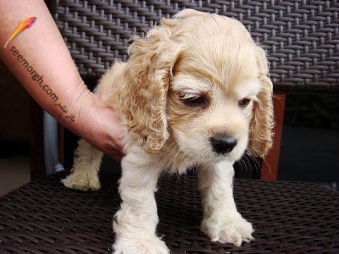 سگ افسرده!!