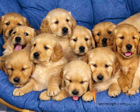 توله سگ ها در یک عکس دست جمعی