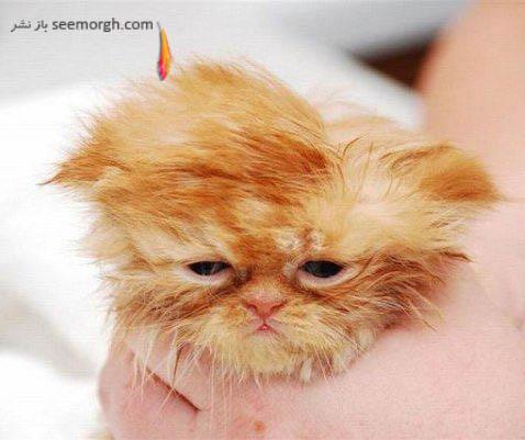 گربه افسرده