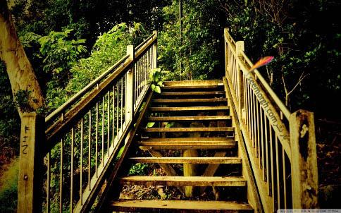 پلی رو به جنگل!؟