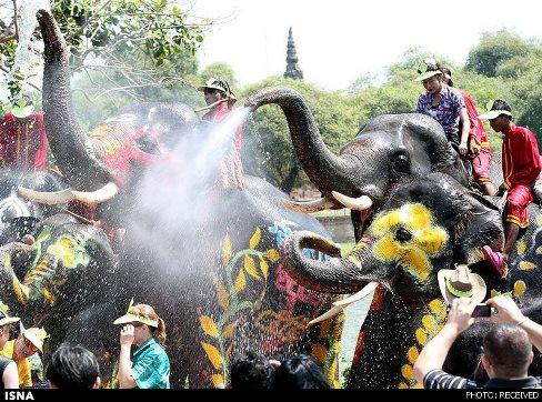 جشنواره,آداب و رسوم,بهار,فصل بهار,جشنواره سونگکران,تایلند