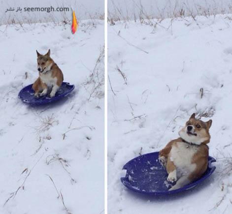 برفی بازی از نوع سگی