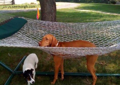 سگی که نه راه پس دارد و نه راه پیش!!