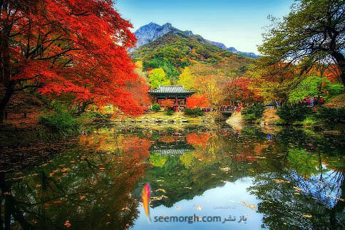 درختان رنگارنگ