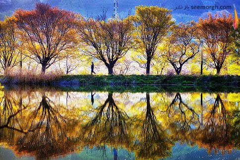 بازتاب درختان در دریاچه