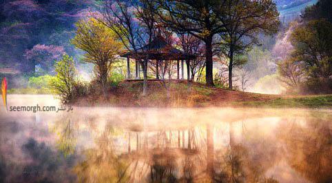 هجوم مه به سمت درختان و دریاچه