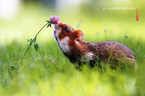 عکس هنری درحال بوئیدن گل