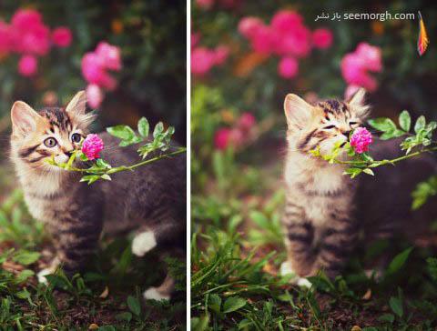 چهره گربه پس از بوئیدن گل