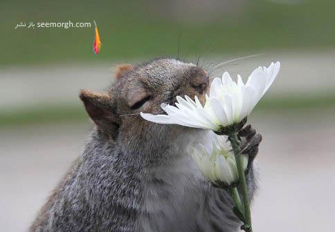 مست از بوی گل!