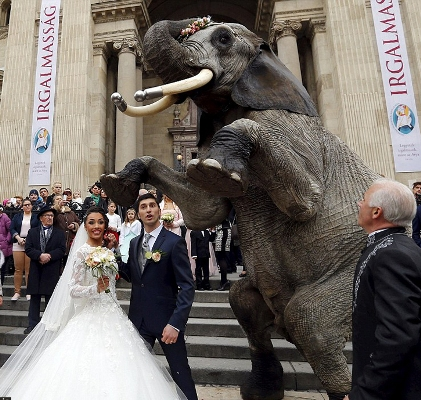 استفاده از فیل در یک عروسی