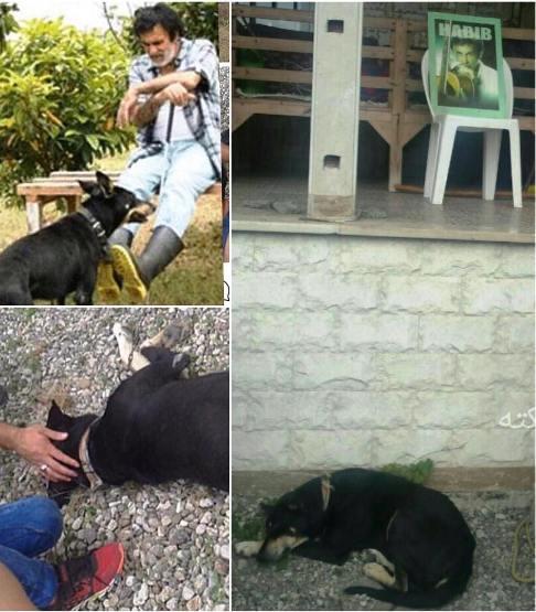وضعیت سگ پس از رفتن حبیب!