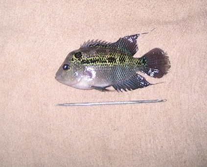 ماهی بیچاره پس از جراحی زیبایی