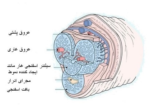 penile-fracture.JPG