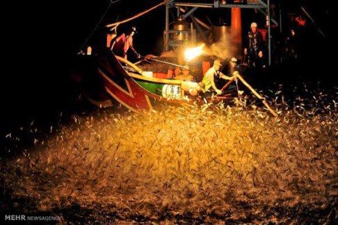 شکار ماهی با آتش 1