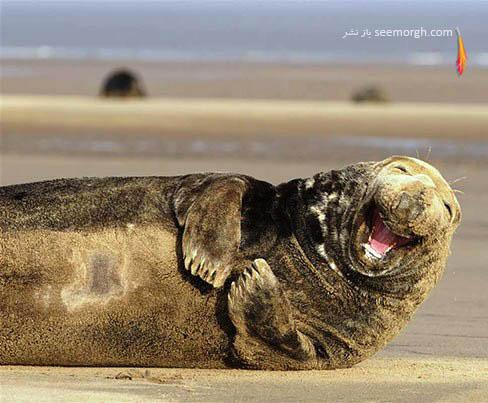 خندیدن فک دریایی