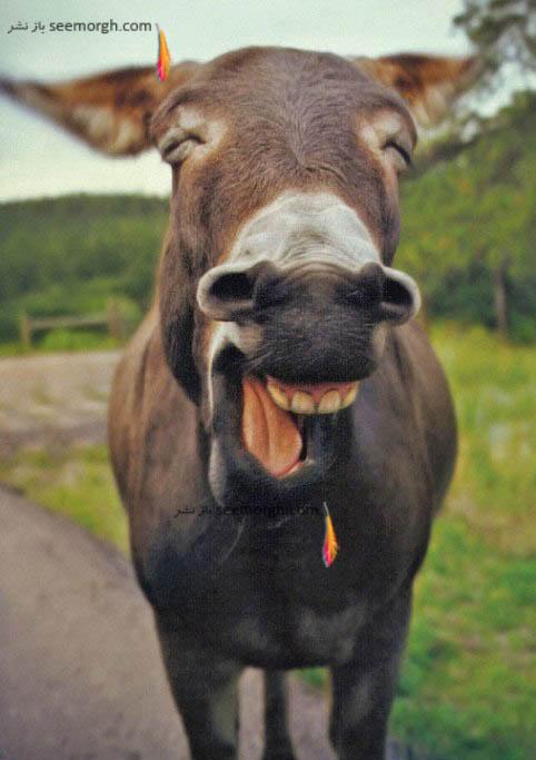 قهقهه خندیدن الاغ!