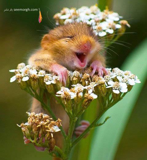 عکس جالب از خندیدن حیوانات