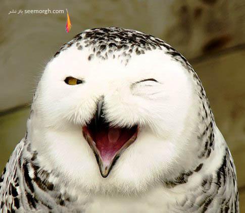 خندیدن جغد !