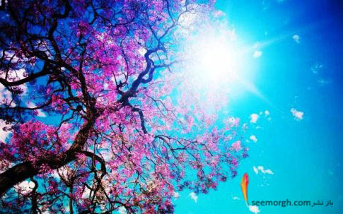 تابیدن خورشید برروی شکوفه ها