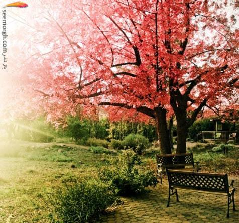 طبیعت در فصل بهار