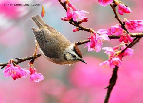 عکسی زیبا از فصل بهار