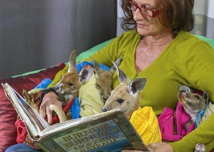 مادر کانگوروها درحال خواندن کتاب!