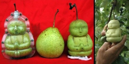 تولید میوه به شکل دلخواه شما 1
