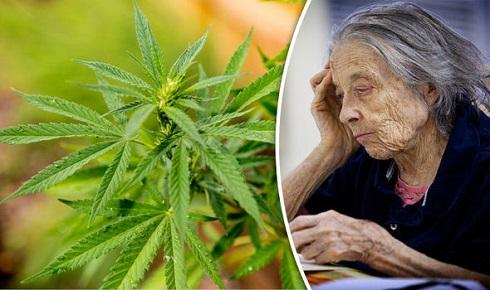 5. ماری جوآنای طبی می تواند مغز را از بیماری آلزایمر محافظت کند