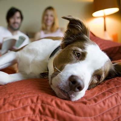 اتاق خود را به محلی برای داشتن روابط عاشقانه تبدیل کنید