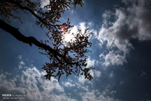 شکوفه های زیبای بهاری 2