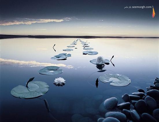 عکس های بسیار زیبا از یک عکاس حرفه ای!عکاسی